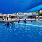 נווה האירוס - יום כיף בבריכה